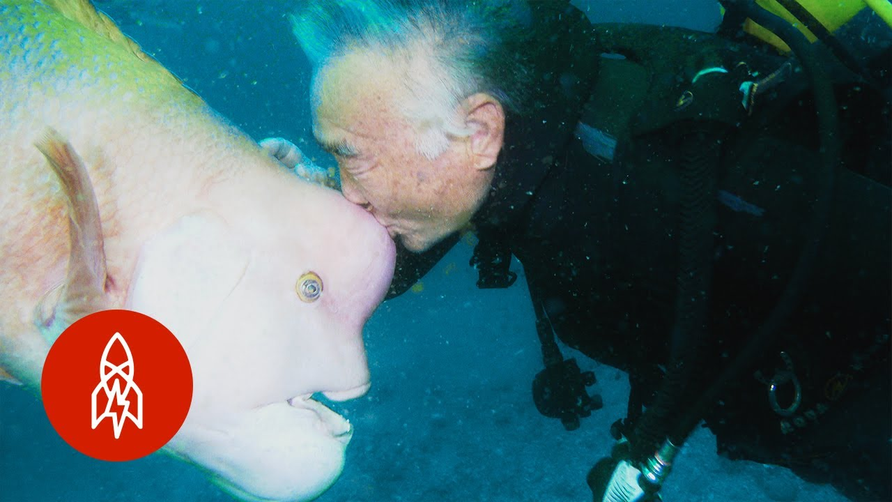 Watch: Scuba diver and fish are best friends